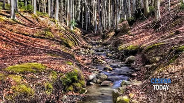 """""""Io sono un albero"""", spettacolo e scarpinata nei boschi del Fumaiolo"""