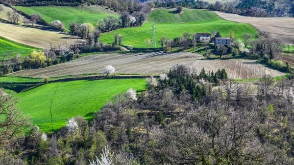 Una salita sulle verdi colline di Romagna