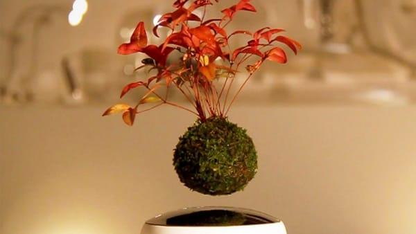 M'ama non m'ama? Un workshop per realizzare i bonsai sospesi di San Valentino