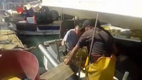 """""""Era rimasta impigliata nella rete del peschereccio"""", recuperata tartaruga da record"""