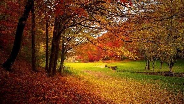 """Una passeggiata autunnale per ammirare il """"fall foliage"""""""