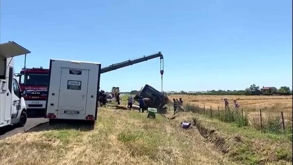 Il camion coi cavalli si ribalta sull'A14, la corsa per soccorrere gli animali: uno muore